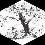 Drevo #1
