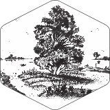 Drevo #2